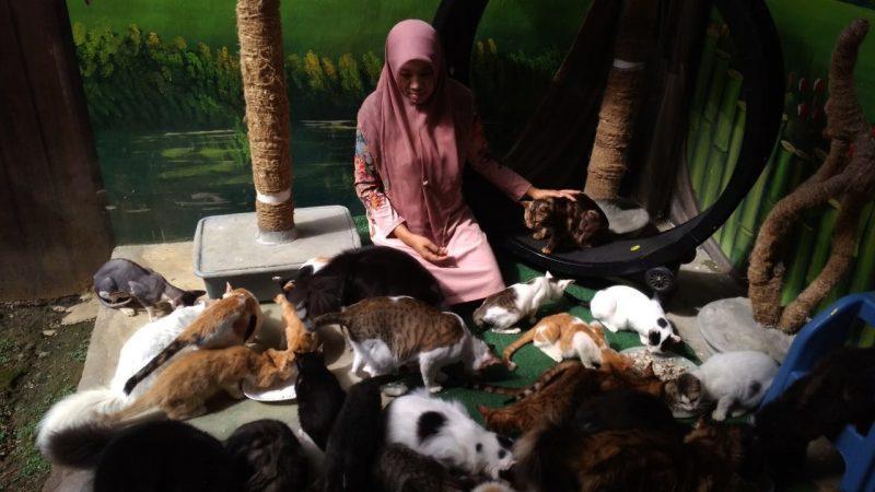 Sang Penyelamat Kucing Jalanan