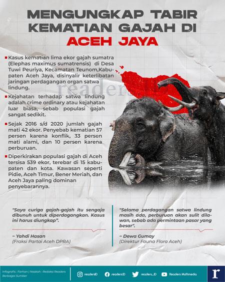 Infografis Mengungkap Kematian Gajah